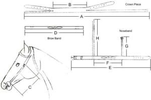 Custom Bridle Measurement Guide
