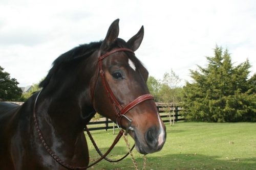 Stock Bridles